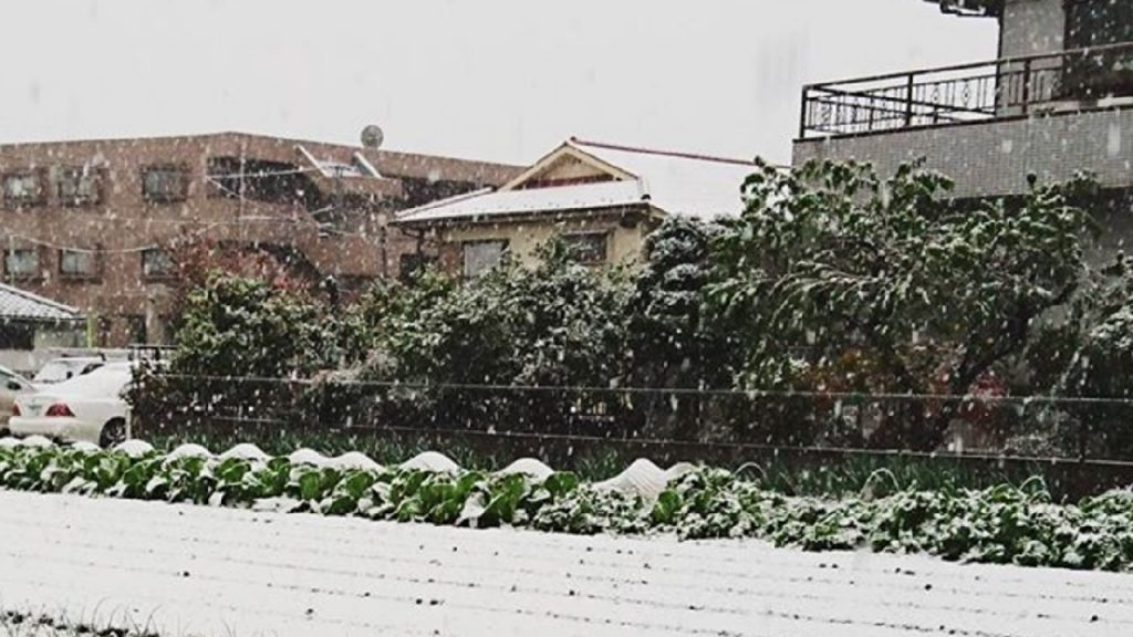 Snow beginning to accumulate in Nerima, Tokyo, Japan.  (Instagram/meikobooo)