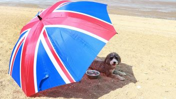 Heathrow tops 34.5C making it the UK's warmest June day in 41 years